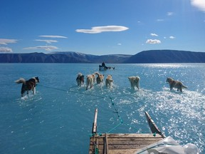 A photo posted by a Danish scientist on Twitter last week appeared to show seven dogs walking in ankle-deep water