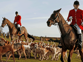 Since a ban stopped fox hunting with hounds in Britain, hunts continued with dogs chasing down a pre-laid scented trail instead of a fox.