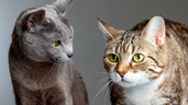 There are many benefits to having a cat as a companion. They can make you feel less lonely, happier and even healthier, but it's important to keep these guidelines in mind before bringing a new pet home.