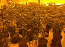 One male was arrested inside the property and charged with cultivation of cannabis and illegal entry to the U.K. / Photo: Twitter, Brent MPS | North West BCU
