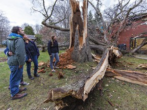 Lukas Korfmann (left), his mother, Keri, and sister Katie look at the remains of a 200-year-old oak tree that was blown onto the rear of their Humberstone Avenue home in Brantford by high winds on Sunday afternoon.