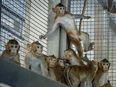 Animal rights activists angry a…