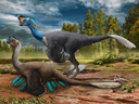 An attentive oviraptorid theropod dinosaur broods its nest of blue-green eggs while its mate looks on in what is now Jiangxi Province of southern China some 70 million years ago.