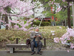 A man reads amidst blossoming cherry trees in Tokyo on March 22, 2021. Rex Murphy recommends reading the A.E. Housman poem Loveliest of Trees to take a pause from the worries of the pandemic.
