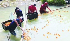 The Nanton Promoters' annual duck race is going ahead Aug. 3 at the Nanton Lions Campground.