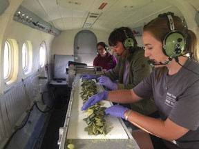Emilie Metcalfe, Sarah Hagey and Barb Piolunowska, of the Ministry of Natural Resources, work together to prepare rabies vaccine pellets to be dropped out of a plane during the August 2019 distribution.