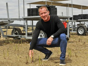 Scott Biddle, Scotlynn Group president and CEO, is shown with an asparagus crop in this May 4 photo. The farm operation in Vittoria is the location of an outbreak of COVID-19 among some of its migrant farm workers. Monte Sonnenberg/Postmedia Network