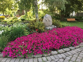The Gananoque Horticultural Society is inviting everyone in town to participate in its petunia garden competition in celebration of the groupÕs 100th anniversary.   Supplied by Joan MacKinnon