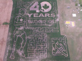 The design in the iMaze on the Dieleman corn farm in Thamesville features Terry Fox this year in recognition of 40 years since he decided to run across Canada to raise money for cancer research.