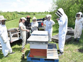 Pictured in June, beehives arrive on Central Huron Mayor Jim Ginn's farm which was the basis in Central Huron becoming a designated Bee City. Daniel Caudle