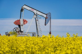 A pumpjack is surrounded by the yellow flowers of a canola field in full bloom west of Sexsmith on Monday, July 27, 2020. The County of Grande Prairie has expressed concerns with new oil and gas assessment models proposed by the province.