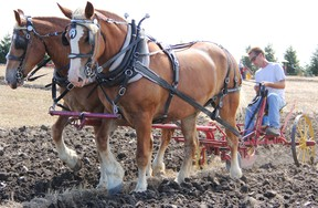 Jake Douglas of Alvinston competed in the Lambton County Plowing Match in this file photo from 2012. This year's edition of the march has been cancelled and celebrations marking the event's 100th anniversary have been postponed to 2021. File photo/Sarnia This Week