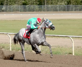 Ricardo Moreno pilots two-year-old Fight Club to his first victory, in his second start, in the John Deer Juvenile Challenge at Evergreen Park last Saturday afternoon. The colt joins an impressive list of Charles Stojan-owned quarter horses looking for international success in short-distance racing