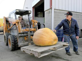 This October's Norfolk County Fair has been cancelled. But the fair's garden products committee has agreed to hold a special weigh-off in October for producers of giant pumpkins and squash. The weigh-off is for fun, with no prize money on offer. File photo/Postmedia Network