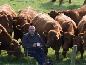 Billy O'Kane chillin' with his cows.