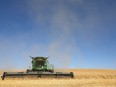Farmers work in the field to bring in the wheat harvest near Beiseker, northeast of Calgary on Wednesday, Sept. 30, 2020.