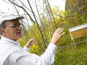 Dr. Henry Svec speaks about one of the bee hives on his property in Blenheim on Oct. 7. Tom Morrison/Chatham This Week