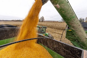 Corn is harvested near Parkhill on Oct. 29. Mike Hensen/The London Free Press/Postmedia Network