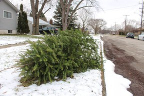 Curbside collection of Christmas trees in Sarnia is scheduled for the week of Jan. 11.