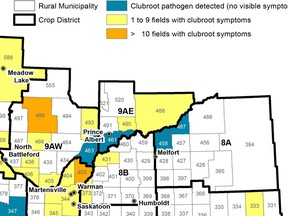 Some areas of North East Saskatchewan have fields infected with club root, a soil pathogen that affects canola. Image from Sask. Ag.