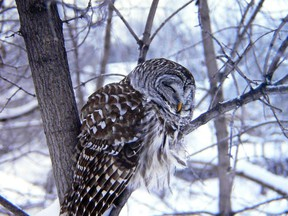 The 24th annual Great Backyard Bird Count is on Feb. 12 to 15.