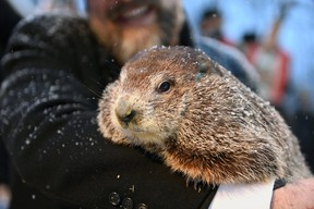 Nova Scotia's most famous groundhog, Shubenacadie Sam, emerged from his pint-sized barn this morning and apparently failed to see his shadow, signalling an early spring. Punxsutawney Phil, seen here, and Wiarton Willie are still to make their predictions. Reuters