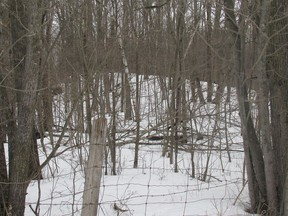The Rideau Waterway Land Trust is raising money to buy about 30 hectares for preservation near Chaffey's Lock.