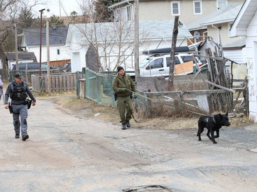 Greater Sudbury Police and Ontario Provincial Police canine unit officers conduct a joint training exercise with Ash in Sudbury, Ont. on Wednesday March 31, 2021. John Lappa/Sudbury Star/Postmedia Network