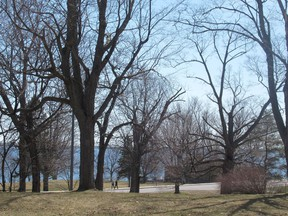 The city is offering new trees for planting as part of its effort to increase the tree canopy in Kingston.