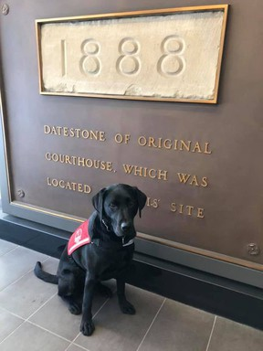 Jake the facility support dog sits at the ready with his vest on for a day of work at the courthouse.