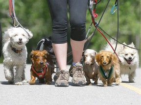 A Dog's Day. Fort Saskatchewan City council has approved a motion to dedicate a section of the West Rivers Edge dog park to small dogs only. Postmedia Filephoto.