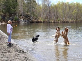 A group of dogs chase after a ball at Laurentian beach at Lake Nepahwin in Sudbury, Ont. on Thursday May 13, 2021. John Lappa/Sudbury Star/Postmedia Network