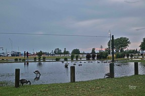 The Saugeen Valley Conservation Authority downgraded its weekend Flood Watch to a Water Safety Statement June 28, but cautioned more rain is in the forecast so caution should be taken near rivers and streams. The deluge was welcomed by Canada Geese at North Shore Park on the Port Elgin waterfront June 27. [Peter Little]