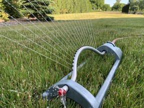 Grass is hardly bothered by drought, but if your straw-coloured turf keeps you up at night, turn the sprinkler on for at least an hour. Put a rain gauge or tin can on the grass and aim for close to an inch of water. Deep watering once a week is better than light, frequent watering. John DeGroot photo