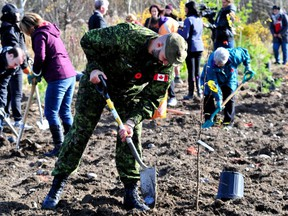 More than 76,500 trees were planted in the Kingston area this spring as part of a Highway of Heroes Tree Campaign and Forests Ontariopartnership designed to reduce planting costs for landowners living near Highway 401.