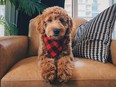 It's important to think about the type of pet you have and design accordingly, says designer Louis Duncan-He