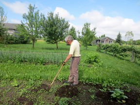 The earlier you remove weeds with a sharp hoe, the less work you will have pulling them later. The secret to successful weeding is to sharpen your hoe and use it while weeds are young. Handout