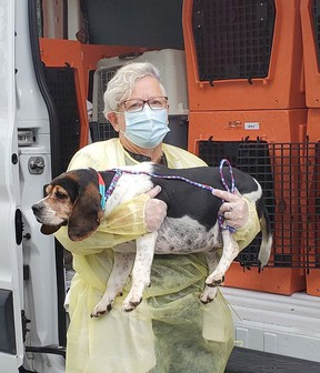 The Ontario SPCA has rescued nine dogs from the United States and transported them to their centres such as one in Napanee to find new homes. SPCA