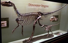 Examples of some of the earliest dinosaurs in the fossil record. Certain features of the skeleton distinguish this very diverse group from other types of animals. Zach Tirrell, CC BY-SA 2.0