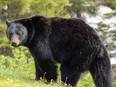 RCMP in Alberta say a 26-year-oldtreeplanterhas died after being attacked by a bear.