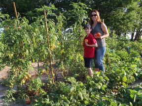 Tricia Weese and her son Brennan, 8, display some of the tomatoes they've grown together in Angelo's Gardens, just west of Chatham. Ellwood Shreve/Chatham Daily News/Postmedia Network