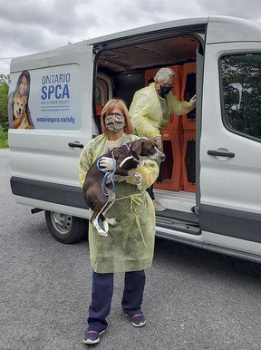 Nine dogs from the United States were transferred to animal centres in Ontario thanks to the Ontario SPCA and Humane Society. The dogs were re-homed from centres south of the border that were at capacity to make room for new furry friends. Two of the dogs were transported to the Ontario SPCA Lennox & Addington Animal Centre in Napanee. Supplied photo Ontario SPCA Lennox & Addington Animal Centre