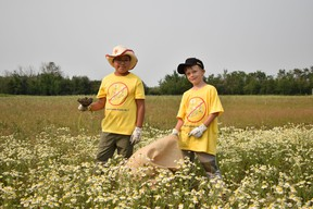 From left to right: Aiden Giesbrecht and Own Born from the Hillcrest Christian School picking weeds out in the county. The County of Grande Prairie Weed Warrior program is open to charity groups and non-profits, who wish to spend a half-day picking weeds for the county, in exchange for a $500 donation to their cause