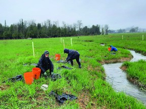 In the past NVCA has had up to 2000 volunteers for tree planting