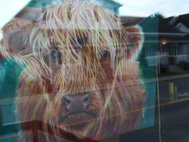 Heilan Coo, acrylic on gallery wrap canvas, by Lesley McVicar, in the window at Alexandria Pizzeria. Photo on Saturday, September 11, 2021, in Alexandria, Ont. Todd Hambleton/Cornwall Standard-Freeholder/Postmedia Network