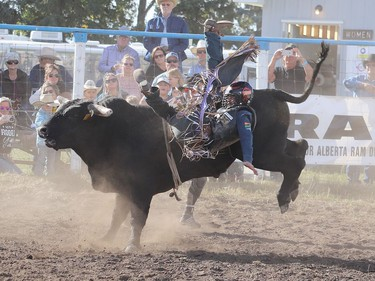 Kyle Brown of Didsbury, Alta takes a tumble from his bull Afraid to Nod at the Hanna Indoor Pro Rodeo held at the Hand Hills Lake Stampede grounds due to COVID-19 restrictions. Jackie Irwin/Postmedia