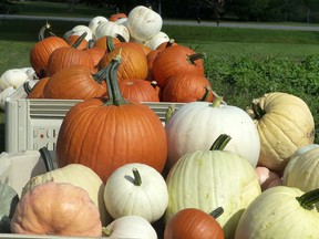 Pumpkins come in all sizes, shapes and colours at Bre's Fresh Market, north of Tillsonburg in Ostrander. (Angela Lassam Photo)