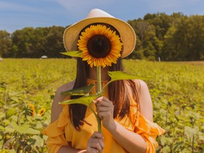 Flower farms are popular for people who want to get fresh flowers, but even more popular for people who want to fill their social media feeds with colourful photos. (Photo from Unsplash)