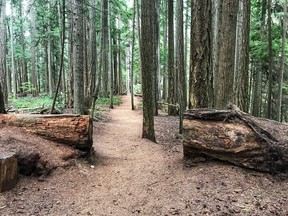 On my forest bathing outing, I walked slowly and intently through this forest.