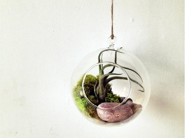 Toronto's Crown Flora studio will be at Idle Hands selling some of their living terrarium  orbs November 23.